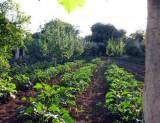 L'orto con le coltivazioni di Masseria Torre Coccaro